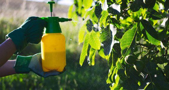 EU authorisation procedure for pesticides