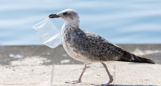 Let's seriously address the problem of plastic waste
